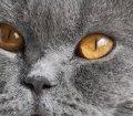 Pfotensitter: Katzen in Erding