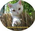 Pfotensitter: Katzen in Wandsbek