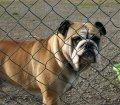 Pfotensitter: Hunde in Sachsen-Anhalt