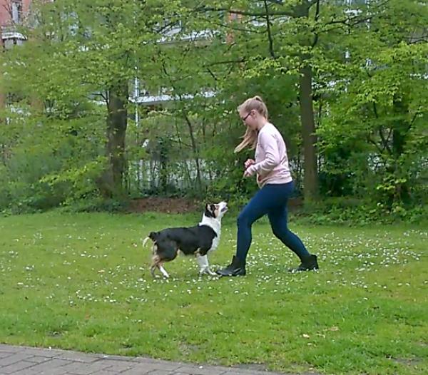 Hunde Ausführen in Bremen