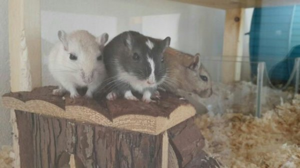 Biete liebevolle Tierbetreuung für Kleintiere, Hamster...