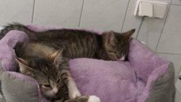 Suche Leipziger/in für gegenseitige Katzenbetreuung
