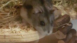 Biete mobile und liebevolle Kleintierbetreuung