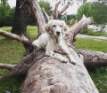 Pfotensitter: Hunde in München