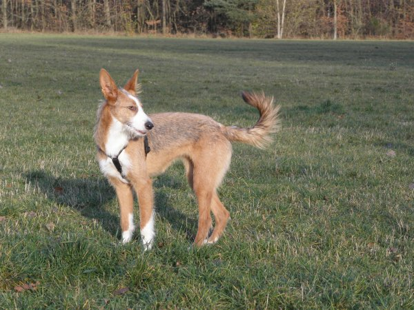regelmäßige Hundebetreuung