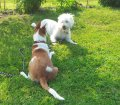 Pfotensitter: Hunde in Stuttgart