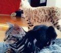 Pfotensitter: Weitere Katzen   in Schalkau