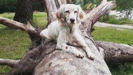 Wechselseitige hundebetreuung